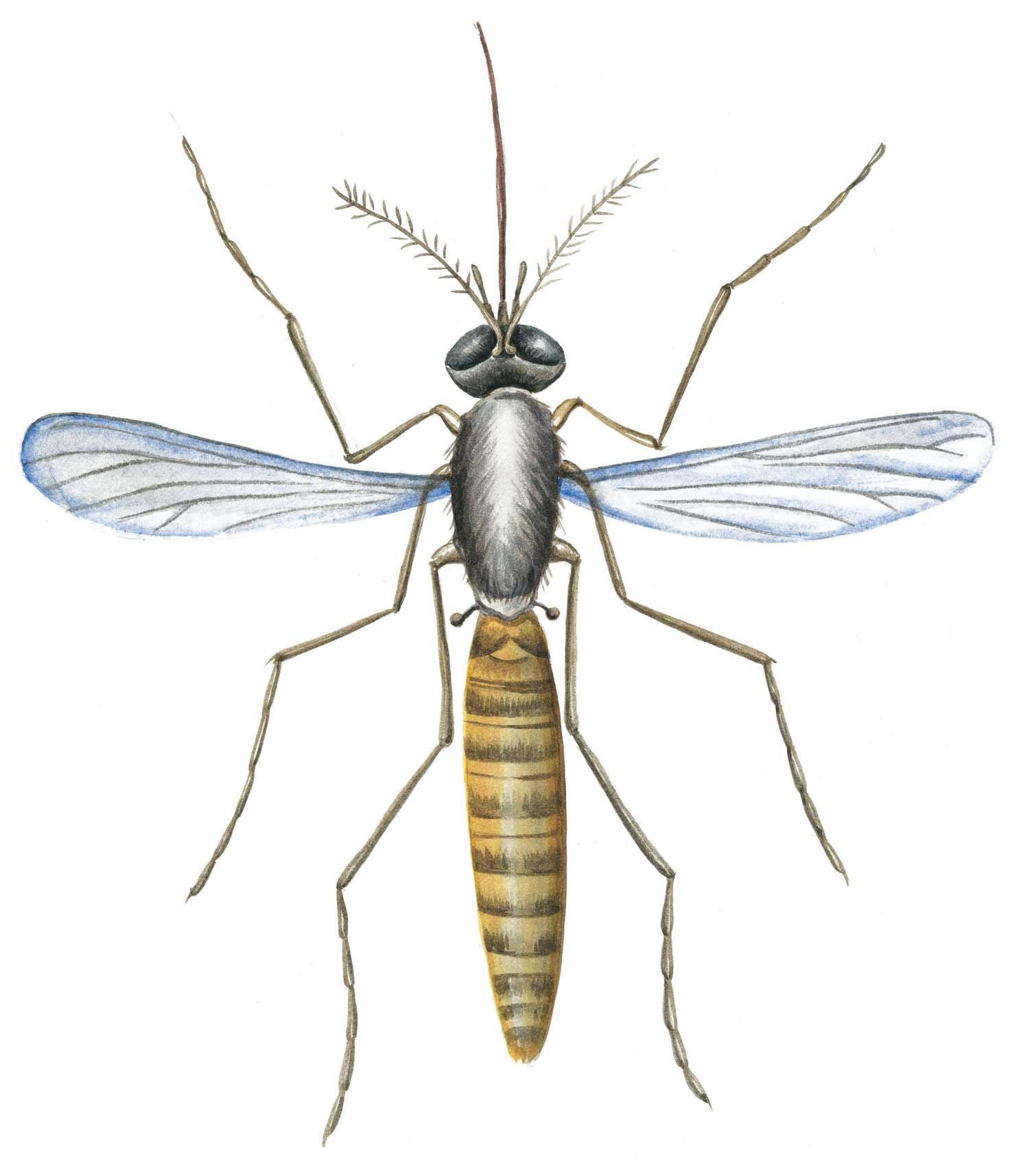 mosquito-fenistil
